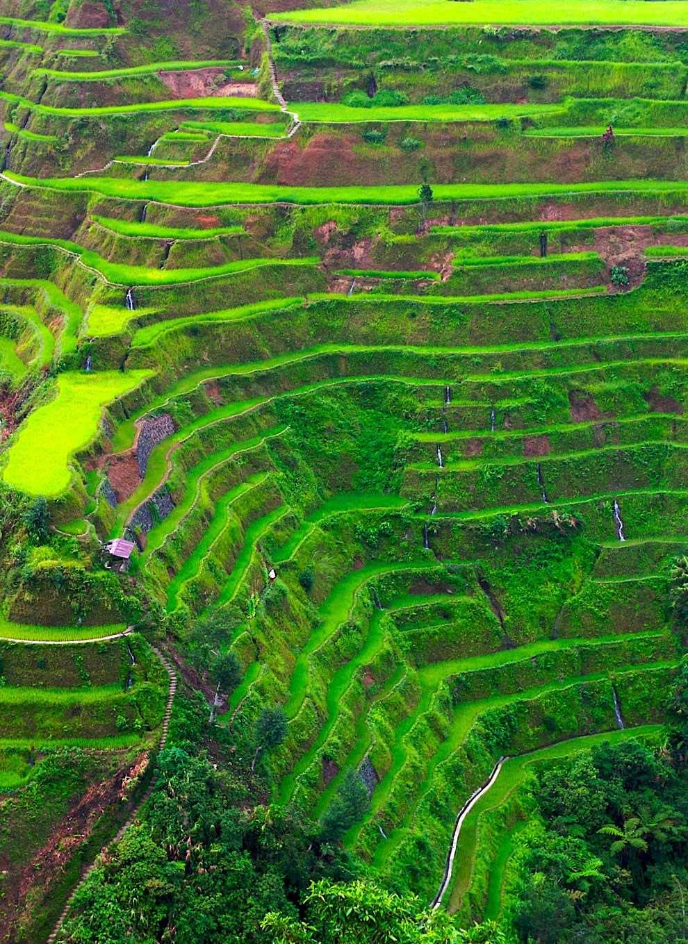 Pemandangan Sawah Hd : pemandangan, sawah, Pemandangan, Sawah, Terdahsyat, Dunia, Banaue, Terraces, (#594511), Wallpaper, Backgrounds, Download