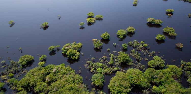 Turismo eco no Brasil: Parque Nacional Anavilhanas - Agência Pequenos Exploradores - It Mãe