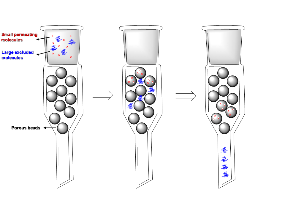 Gel permeation chromatography/ Size exclusion