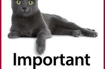 Decorative cat picture