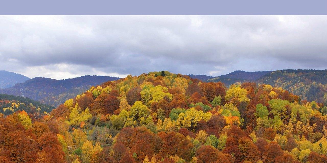 Ελληνικά δάση και πράσινοι προορισμοί