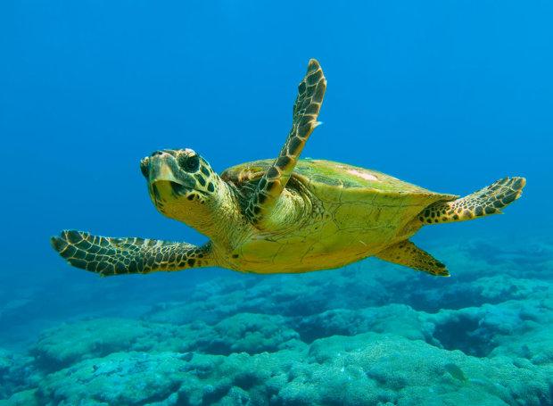 Παγκόσμια Ημέρα Θαλάσσιας Χελώνας , Τι συμβαίνει στο Κέντρο Διάσωσης του ΑΡΧΕΛΩΝ στη Γλυφάδα