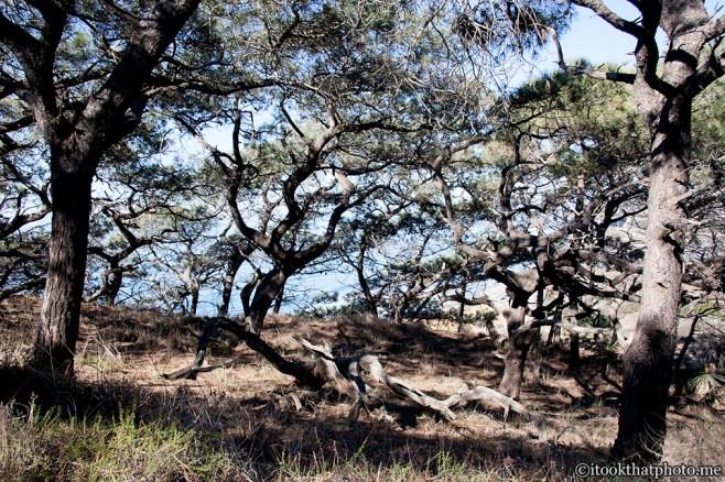 Torry Pines