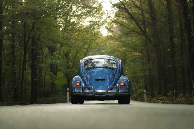 blue forest car beetle