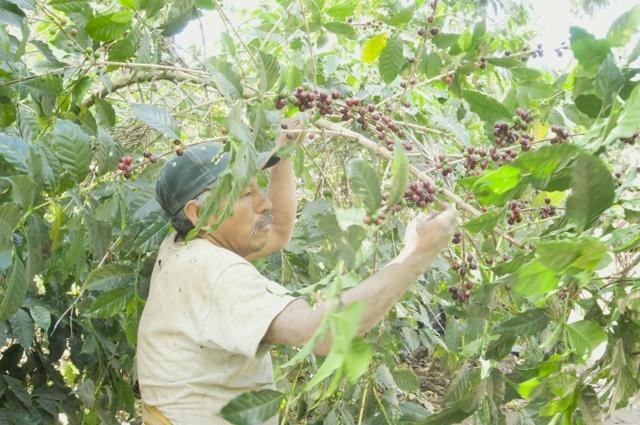 Antigua - 53farm2