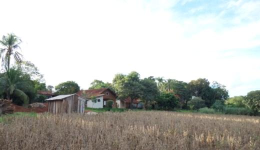 4/15 大豆畑の草刈り@ゆば農場 , Mirandópolis , Brazil