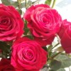 義父の誕生日に80本のバラの花が届いた!