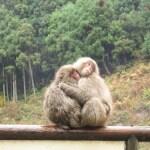 阪急交通社のバスツアー『信州湯ったり 湯田中温泉郷2日間』に行ってきたよ~