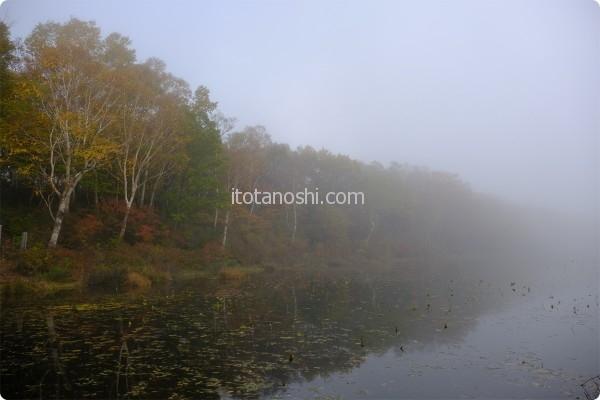 蓮池 霧が…