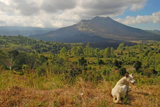 A dog in front of Mount Batur Volcano in Bali