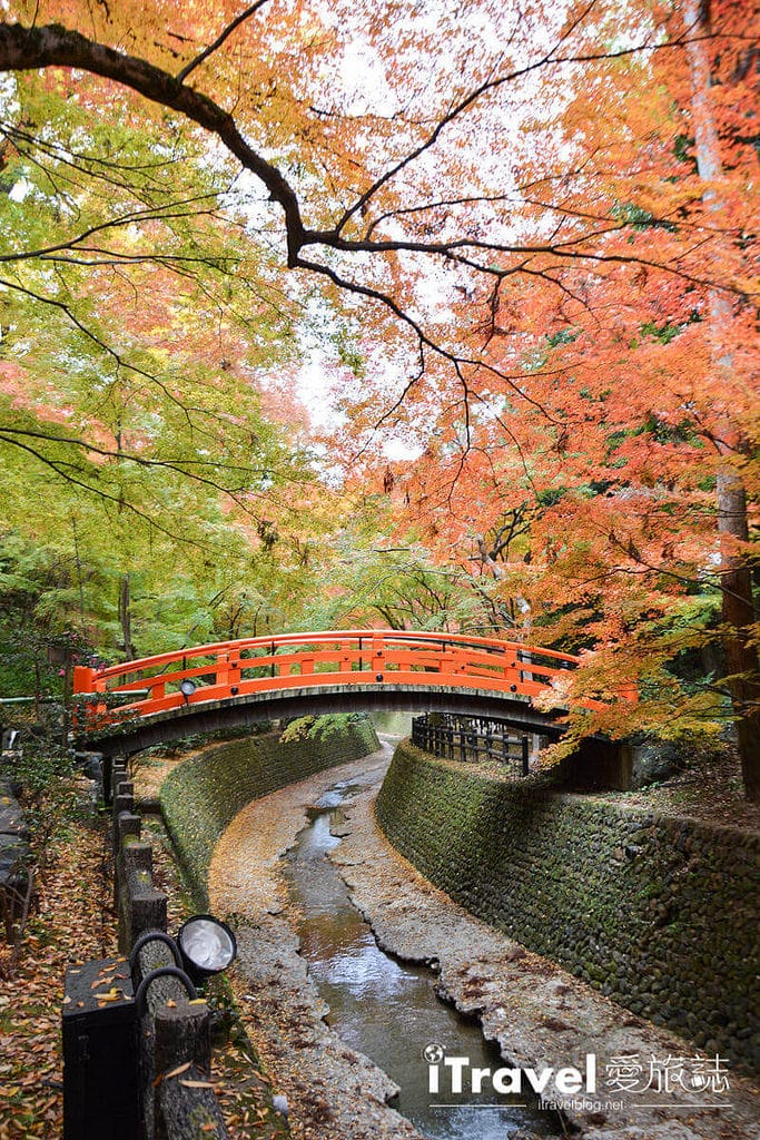 《京阪自由行》9天8夜賞楓行程攻略:關西紅葉共舞銀杏美景