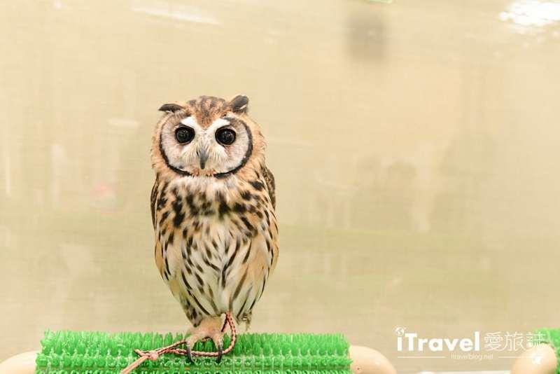 《福岡景點推薦》OWL Family 貓頭鷹咖啡店:教你線上預訂與萌萌小傢伙的約會