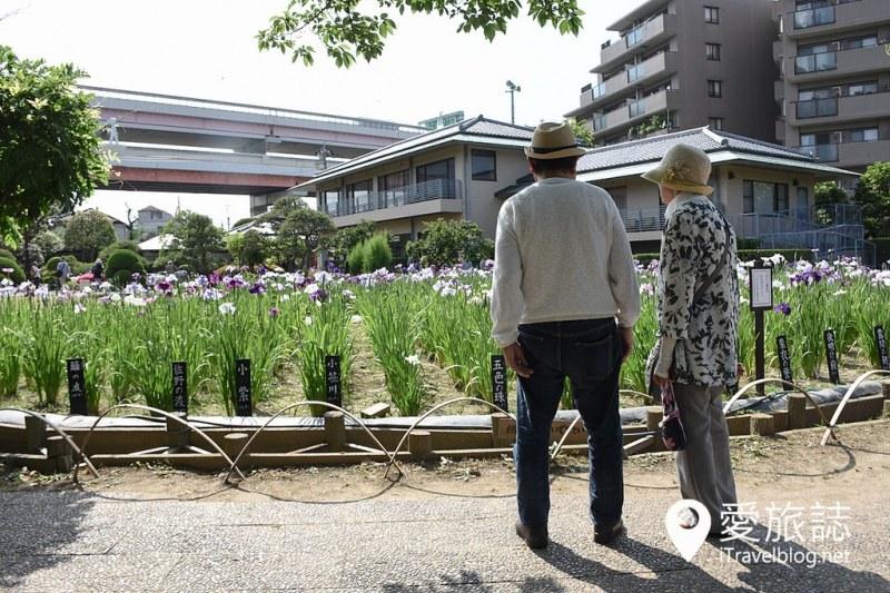 《東京景點推薦》堀切菖蒲園:無料賞花名所,沿途加映紫陽花盛開美景
