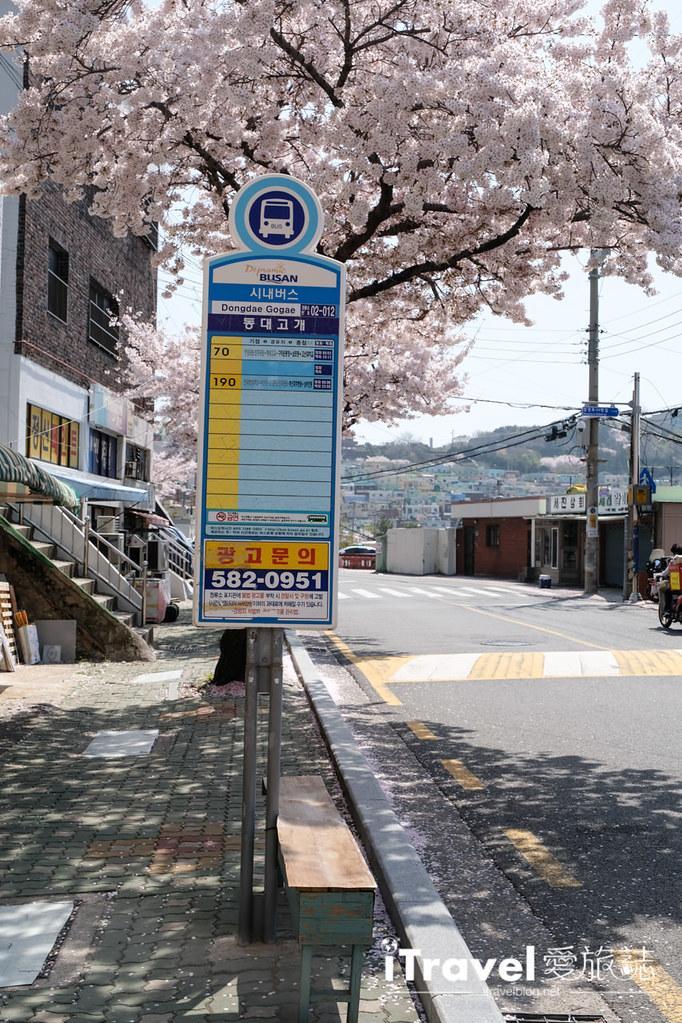 釜山賞櫻景點 東大新洞望洋路 (11)