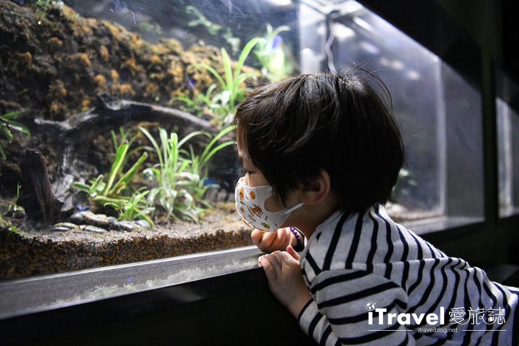桃園八景島水族館 Xpark (42)