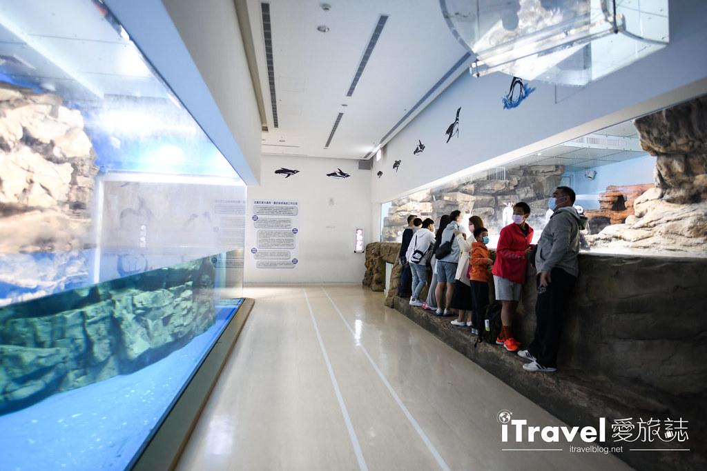 桃園八景島水族館 Xpark (94)
