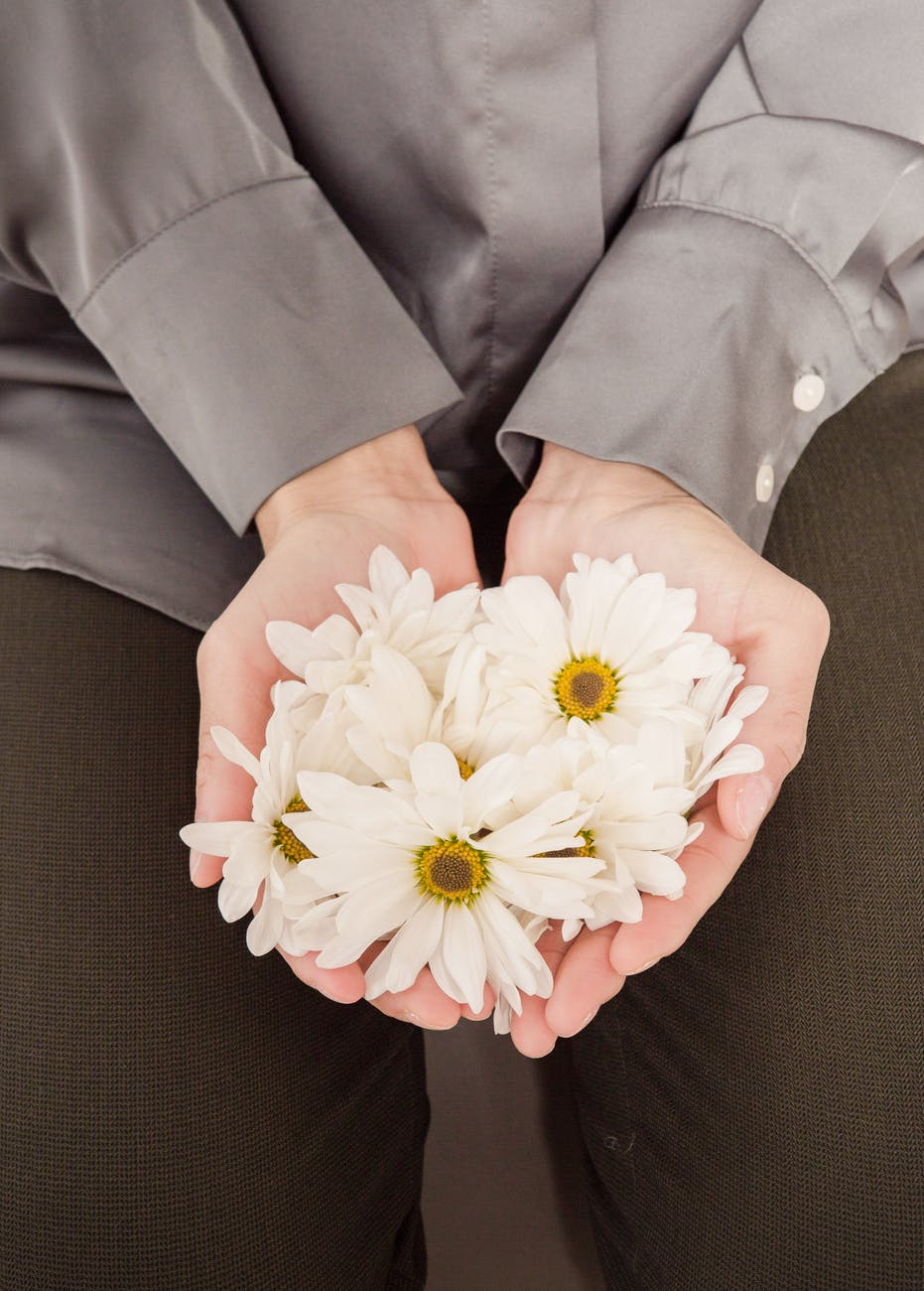 anonymous woman showing handful of fresh chamomiles