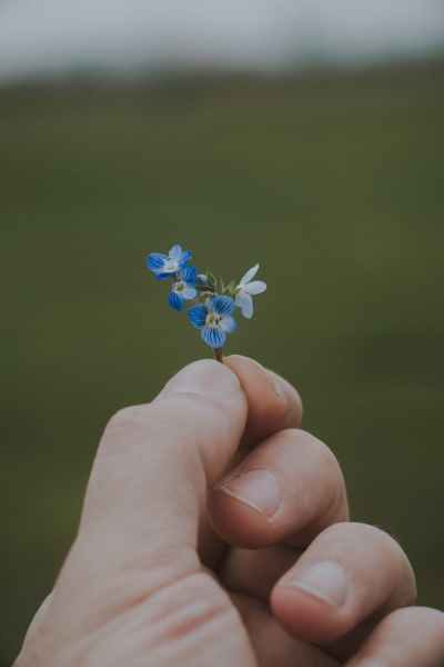 anonymous man with blooming blue flowers in hand