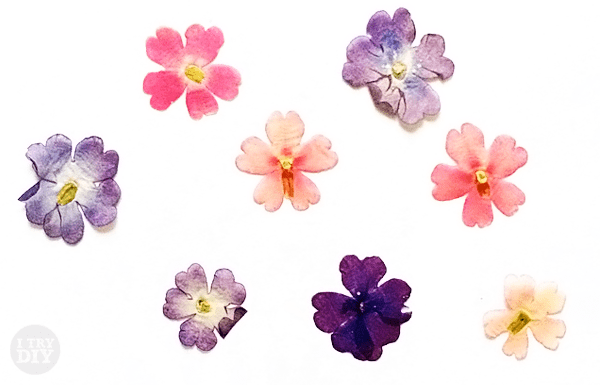 I Try DIY | Don't these Pressed Flowers look Watercolored?