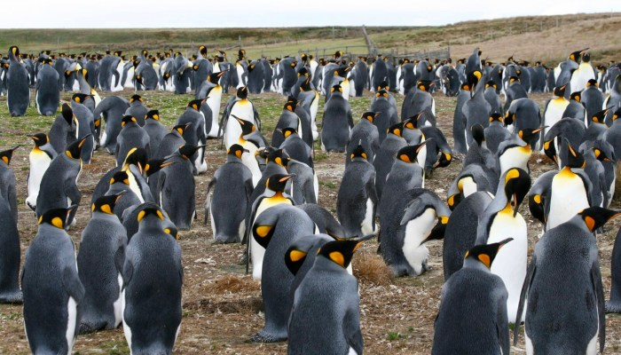 One of my travel highlights of my life- Penguins of Volunteer Point