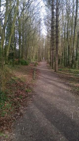 Birdy Woods