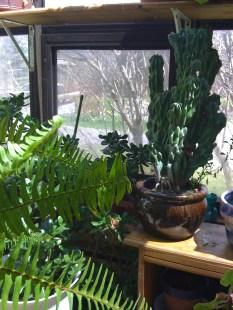 ferns & cactus