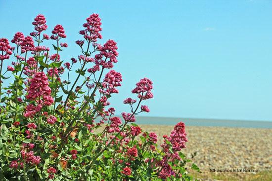 Aldeburgh-beach-14