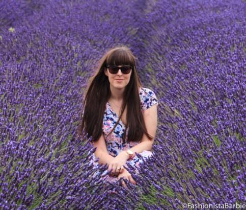 lavender-farm-very-dress-22