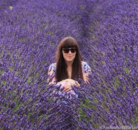 lavender-farm-very-dress-26