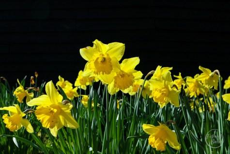 Spring-style-weekend-6