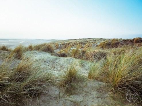 camber sands, sand dunes, beach, uk beach