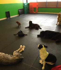 Doggy Daycare, Pet Daycare, Greenfield, Greenfield Doggy daycare