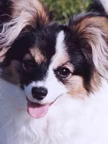 2004-9