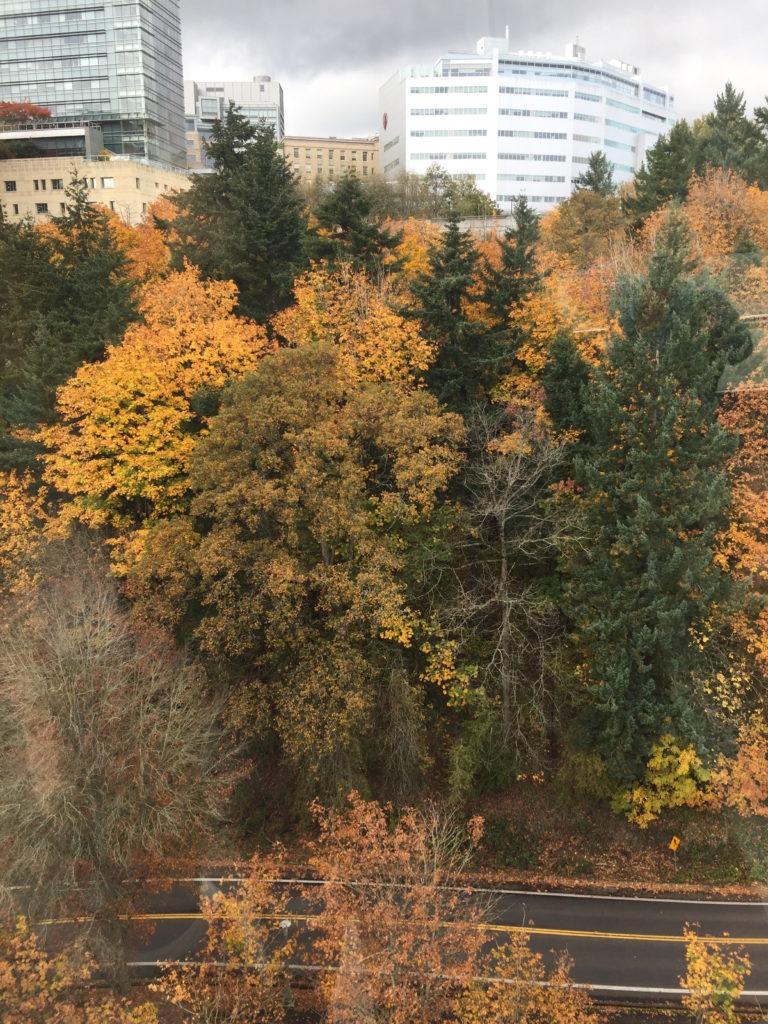 portland tram-trees