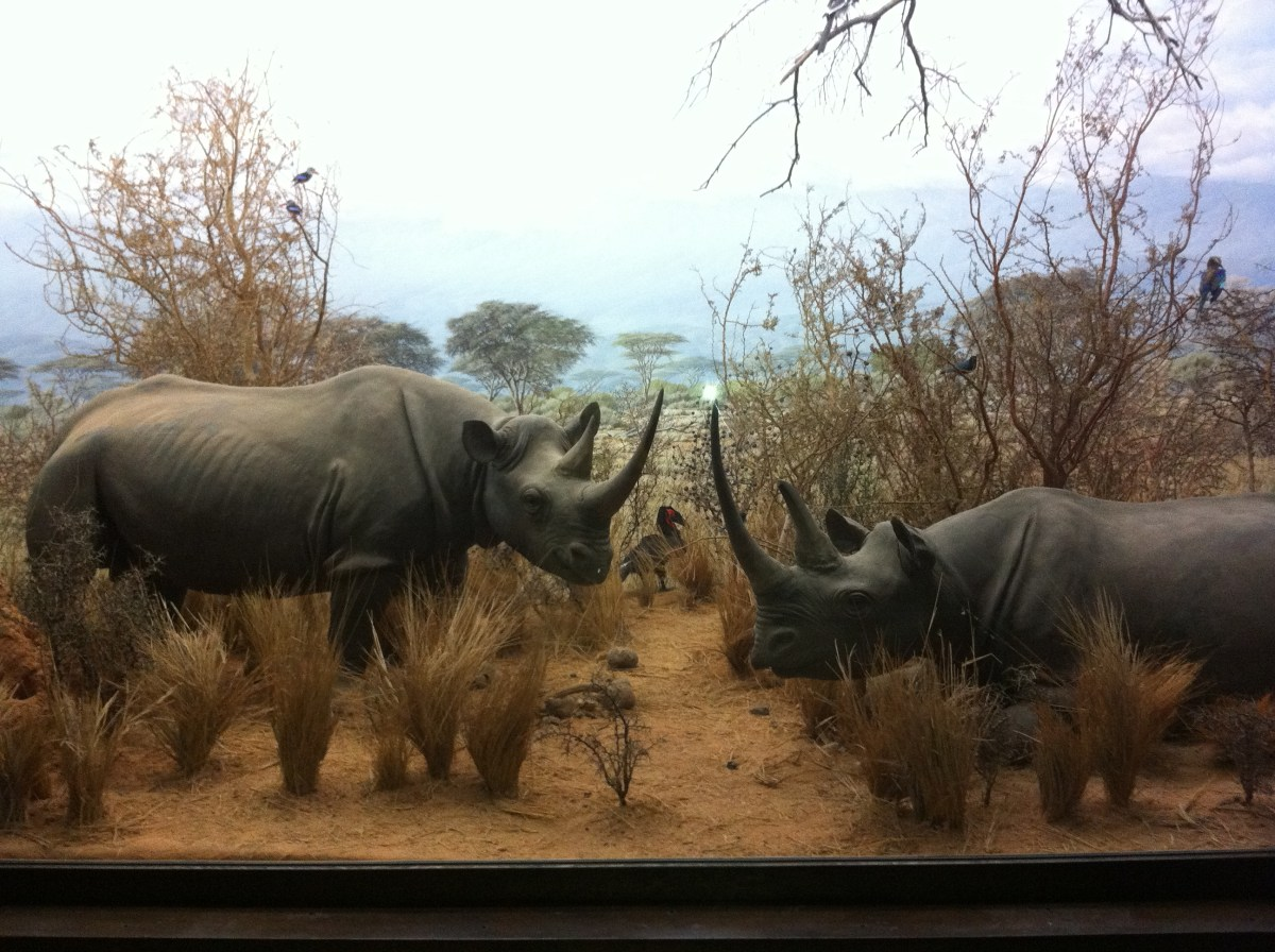 Natural History Museum Dead Animal Zoo