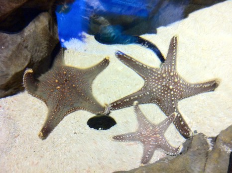 lovely star fishes