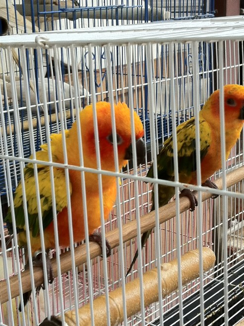 the parrot pair
