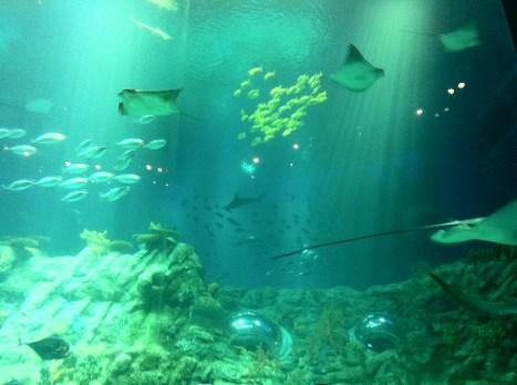 what a beautiful sight at the Aqua City