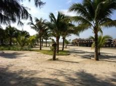 Coconut trees along the resort beach