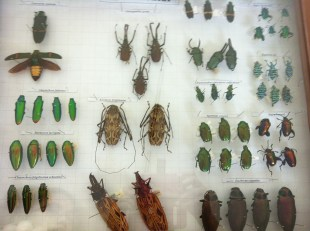 Cockroaches collection