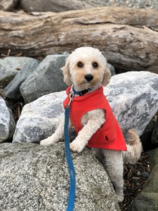dog travel companion outdoors fun