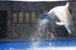 gran-canaria-palmitos-park-delphin