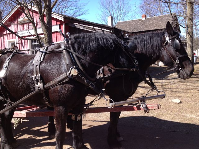 horse and wagon ride at westfield heritage village