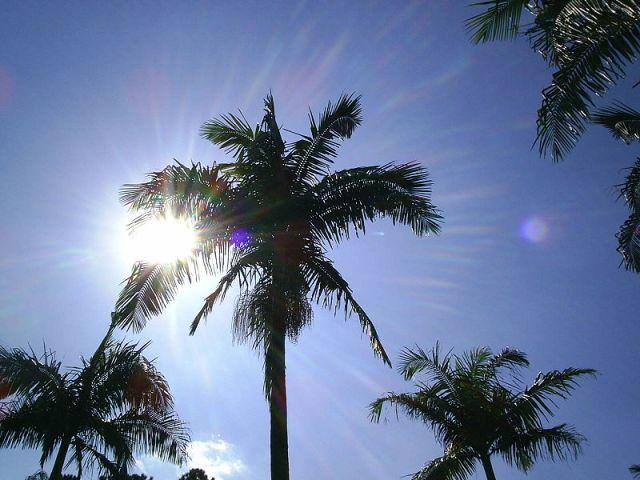 800px-Aracaceae_under_the_sunlight