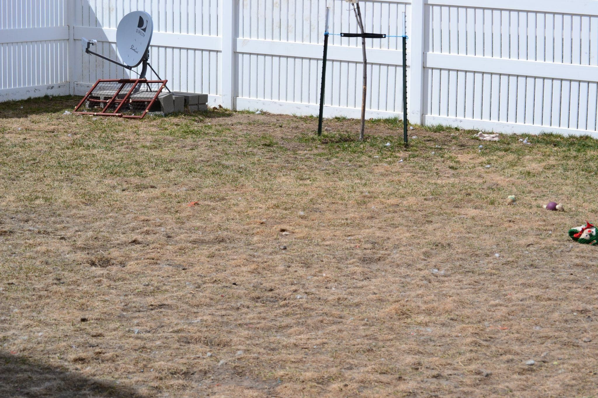 Can You Bury Your Dog In Your Backyard In Ma