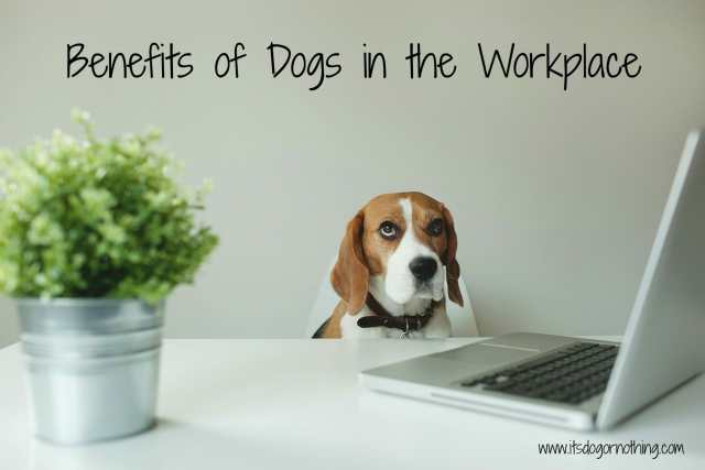 Benefits of Dog in the Workplace