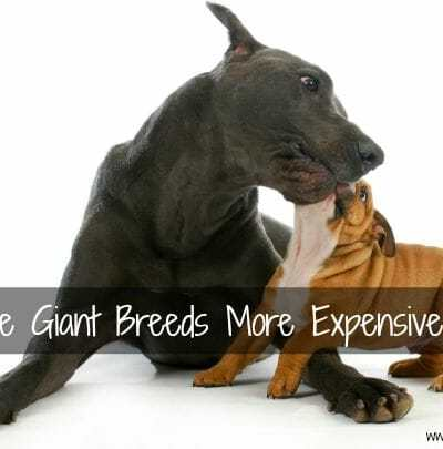 Why Are Giant Breeds More Expensive? It's Not Just the Food