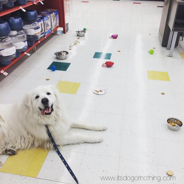 """We like to set up """"obstacle courses"""" filled with toys, treats, and water (his biggest challenge!)."""