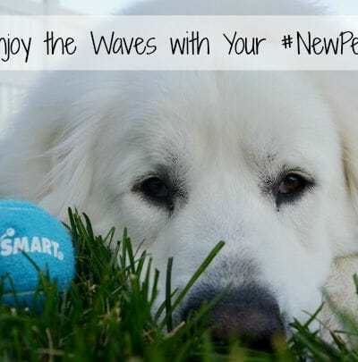 Tips to Enjoy the Waves with Your #NewPetPartner