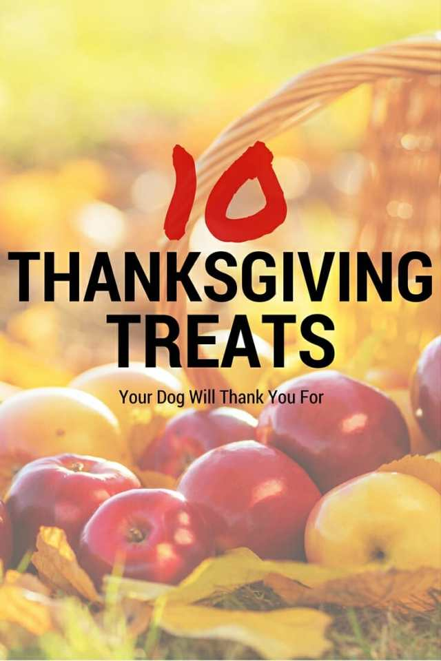 10 Thanksgiving treats your dog will woof over.